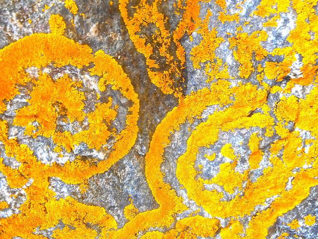 Lichens, Structure, Orange, Pattern, Natural Art