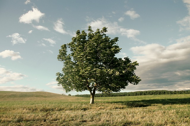 Tree, Wind, Crown, Nature, Landscape, Sky, Lichtspiel