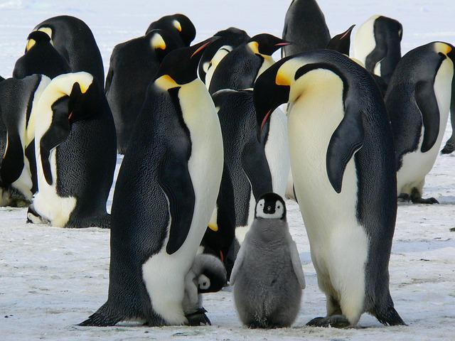 Penguins, Emperor, Antarctic, Life, Animals, Cute, Ice