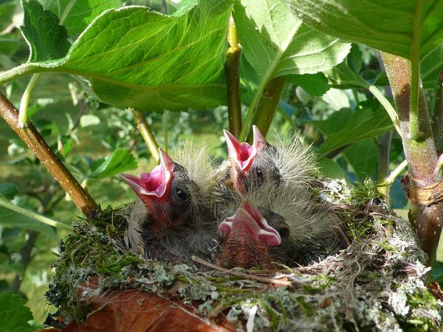 Chick, Spring, Birds, Life, Little Birds, Baby Birds