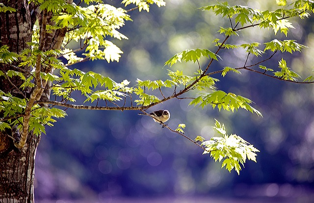 Bird, Animal, Wildlife, Yard, Spring, Life, Outdoor