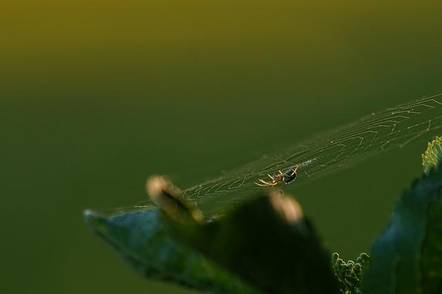 Spider, Animal World, Leaf, Light, Nature, Spring