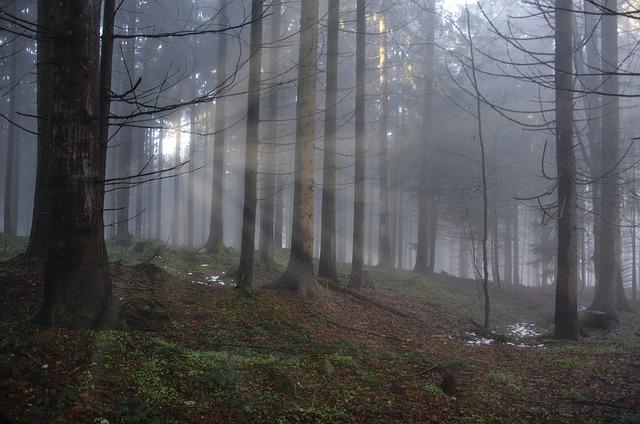 Forest, Light, Light Beam, Mood, Trees, Flooded