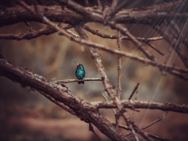 Hummingbird, Nature, Birds, Garden, Natura, Light, Day