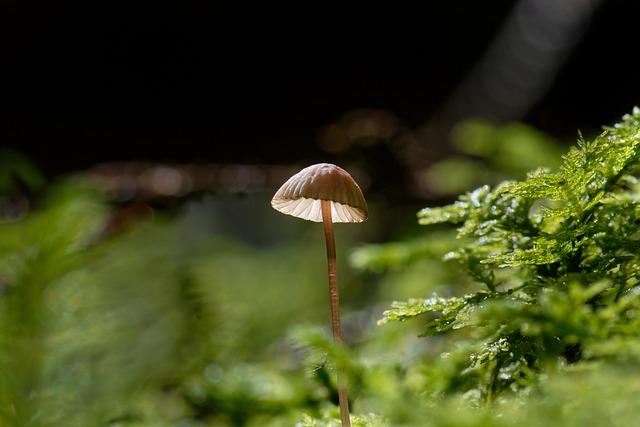 Mushroom, Hamid, Forest, Nature, Light, Moss, Close Up