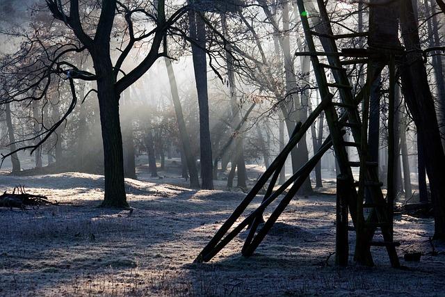 Forest, Light, Mood, Light Beam, Morgenstimmung