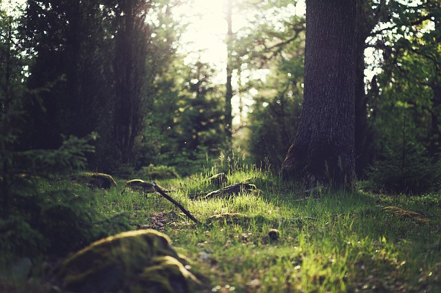 Forest, Trees, Light, Dust, Clearing, Glade, Nature
