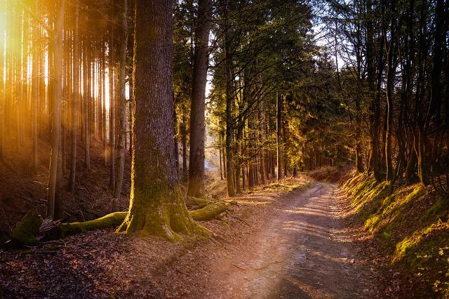 Forest, Sun, Warm, Nature, Light, Trees, Landscape