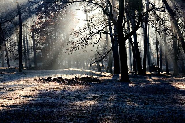 Forest, Light, Mood, Light Beam, Morgenstimmung