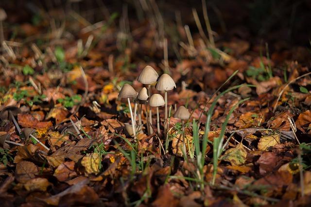 Mushroom, Autumn, Autumn Mood, Light, Manure Fungi