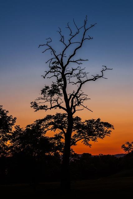 In The Evening, Sunset, Light, Dusk, Mood, Nightfall