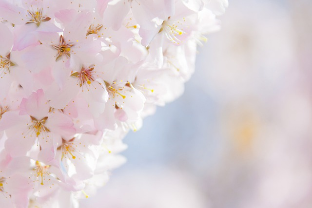 Beautiful, Pink, Plant, Flora, Nature, Blossom, Light