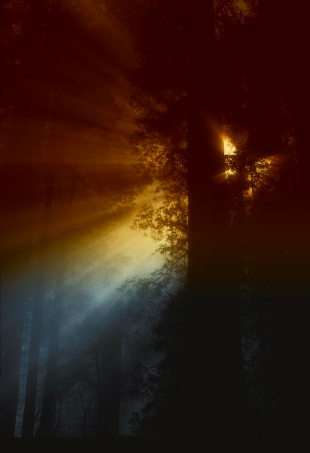 California, Sun, Rays, Light, Sunlight, Forest, Trees