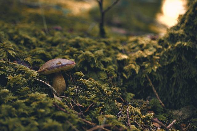 Forest, Mushroom, Fungus, Moss, Light Shaft, Outdoor
