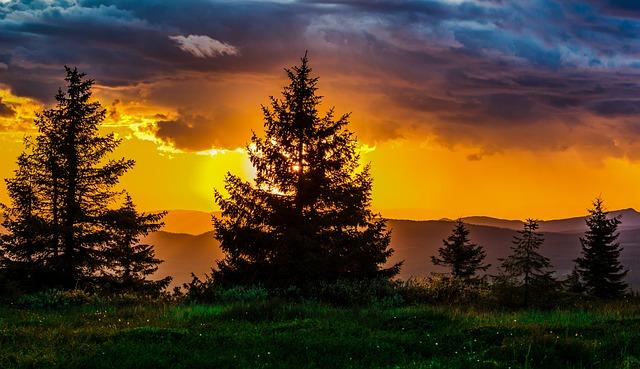 Sunset, Trees, Nature, Horizon, Red, Light, Silhouette
