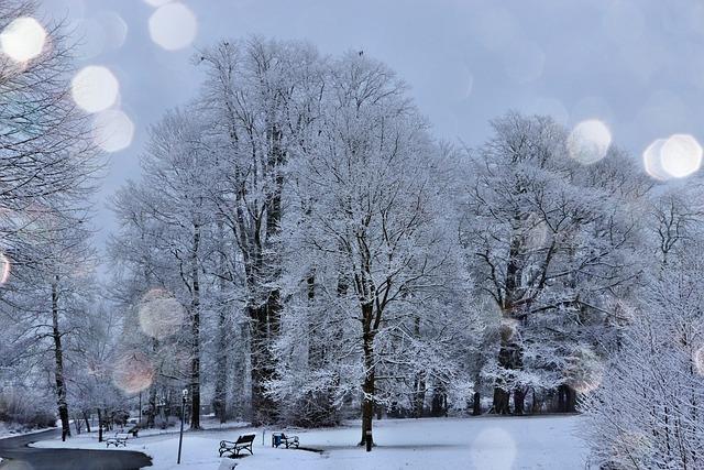 Frost On Trees, Light Snow, Frosty Night