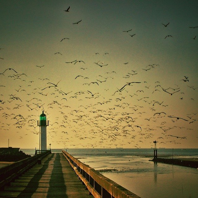 Lighthouse, Gulls, Sky, Seagull, Fly, Sea, Water