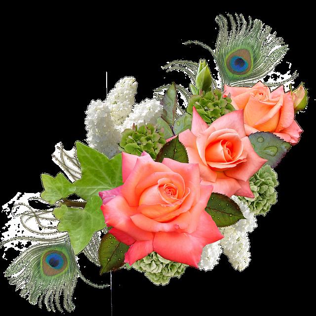 Rose, Rose Flower, Hydrangeas, Lilac, Peacock