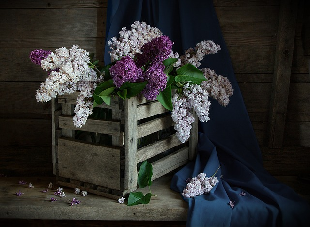 Still Life, Lilac, Shadow, Box, Flowers