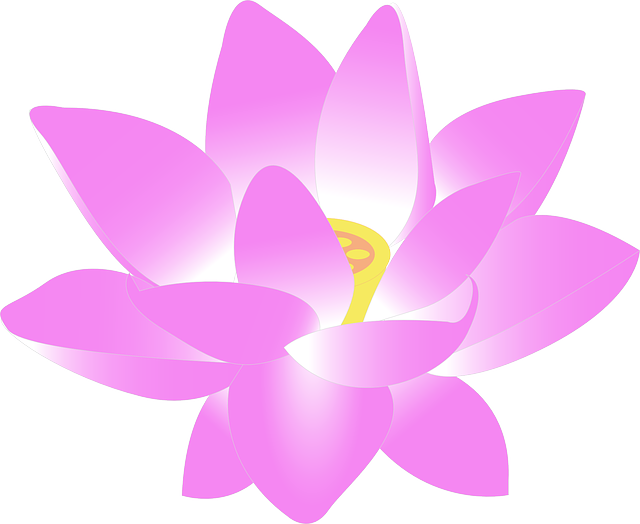 Flower, Water Lily, Lily, Lotus, Aquatic, Bloom