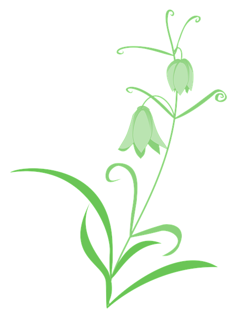 Fritillaria, Lily, Green, Flowers, Simple