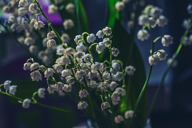 Lily Of The Valley, Dark, Night, Flower, Bloom, Blue