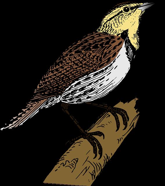 Bird, Branch, Lark, Limb, Rama