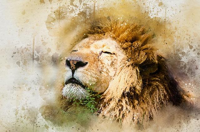 Lion, African Lion, Skeezy Lion, African, Cat, Wild