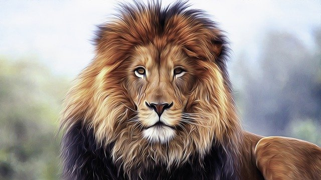 Lion, King, Animal, Predator, Africa, Wild, Mane, Fur