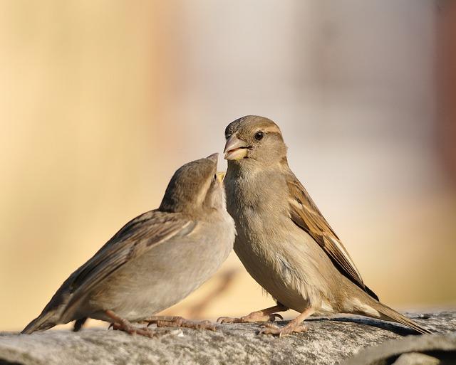 Bird, Sparrows, Little Bird