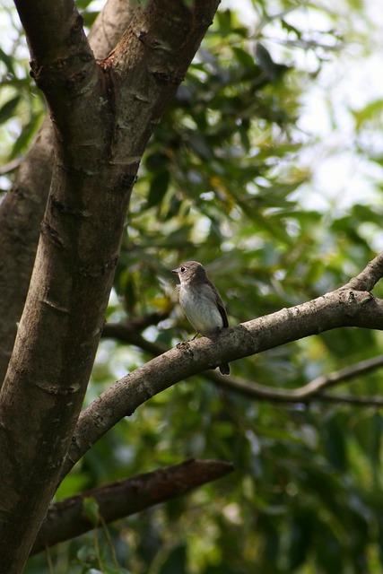 Animal, Forest, Wood, Green, Autumn, Little Bird