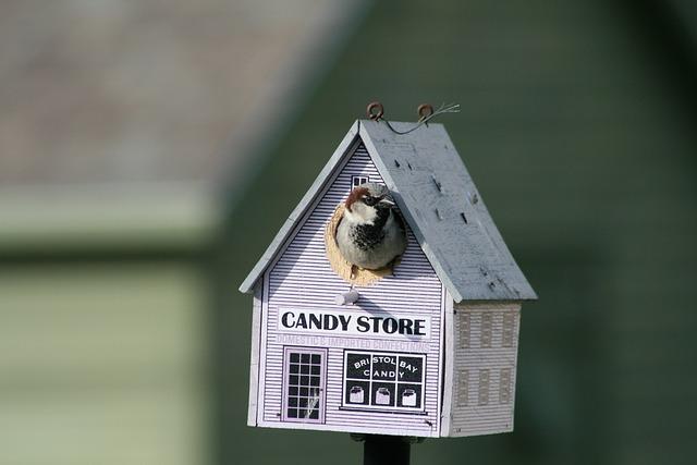 Family, House, Little, Bird, Outdoors, Nature, Wildlife