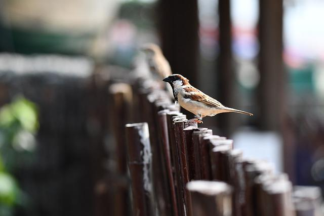 Bird, Nature, Outdoors, Wildlife, Wood, Little, Fence