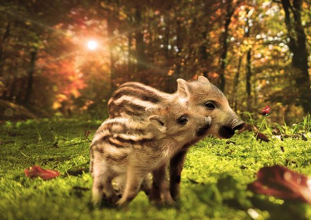 Boar, Little Pig, Forest, Nature, Wild Boar, Wild