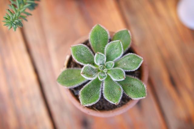 Little Plant, Succulent, Table Plant