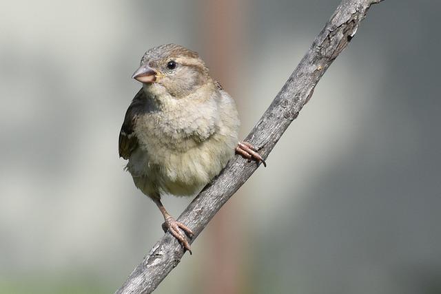 Bird, Wildlife, Nature, Little, Outdoors