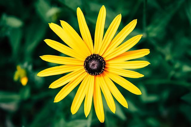 Nature, Summer, Plant, Flower, Leaves, Live, Color