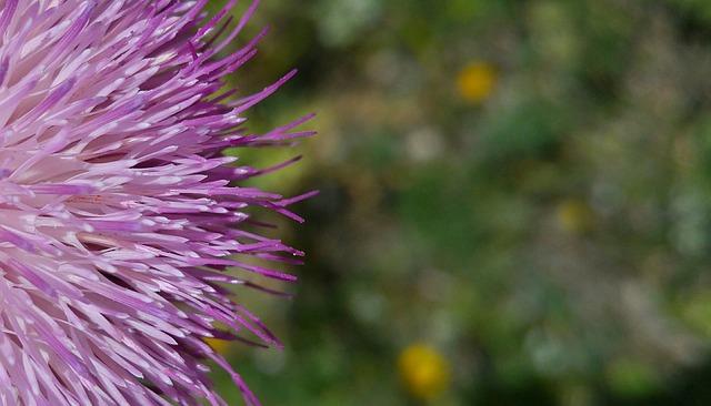 Nature, Flower, Plant, Summer, Outdoor, Petals, Live