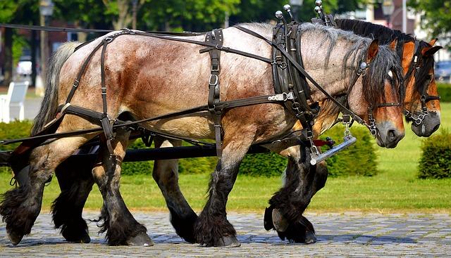 Work Horses, Draft Horses, Livestock, Strong, Brown