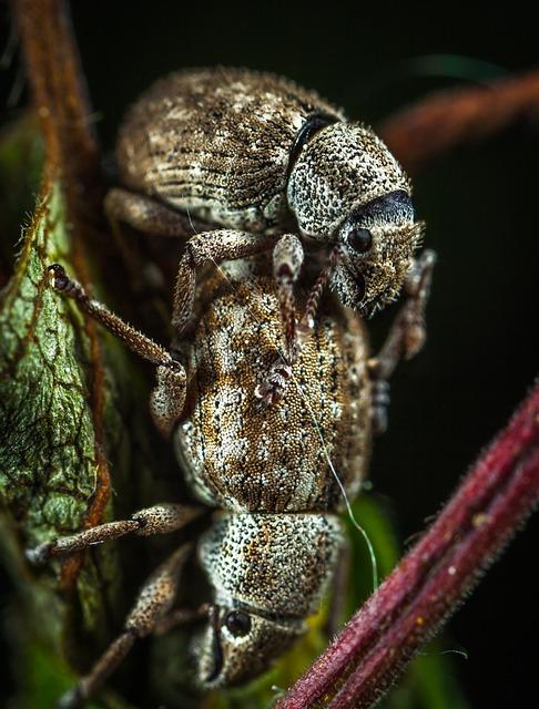 Beetle, Insect, Bespozvonochnoe, Living Nature, Animals