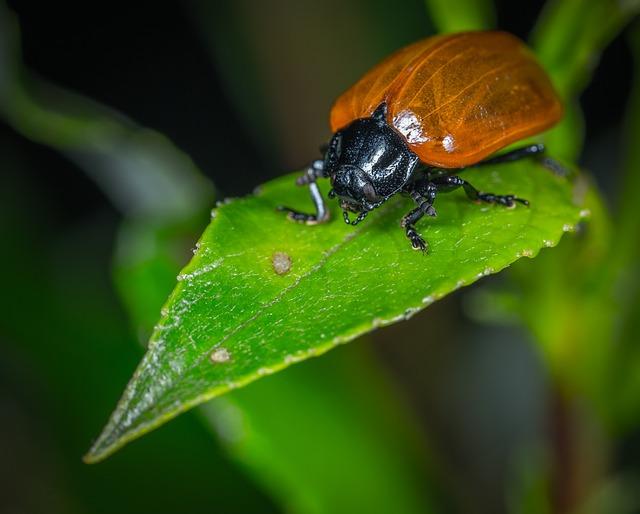 Insect, Beetle, Bespozvonochnoe, Living Nature, Macro