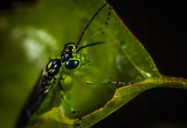 Insect, Bespozvonochnoe, Nature, No One, Living Nature