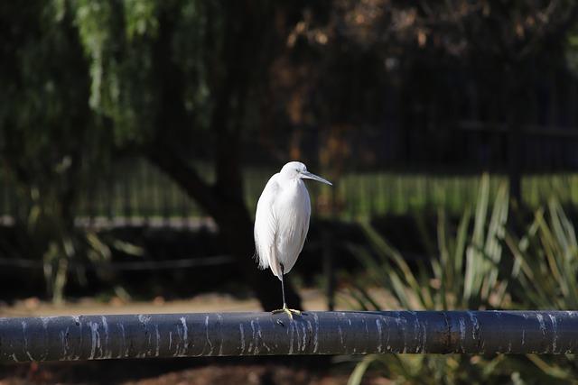 Nature, Bird, Living Nature, Water, Outdoors, Stork