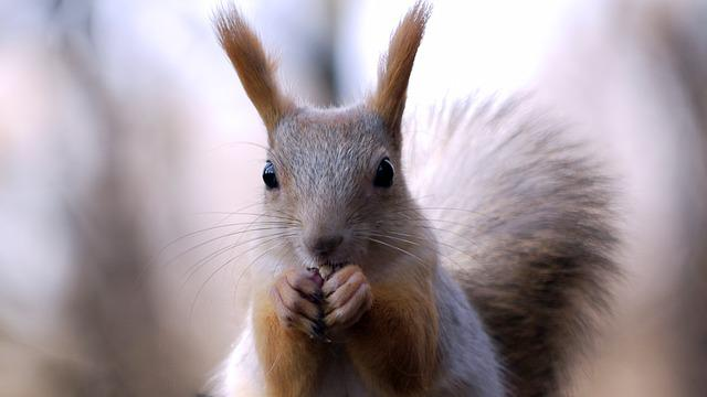 Cute, Mammals, Animals, Fur, Living Nature
