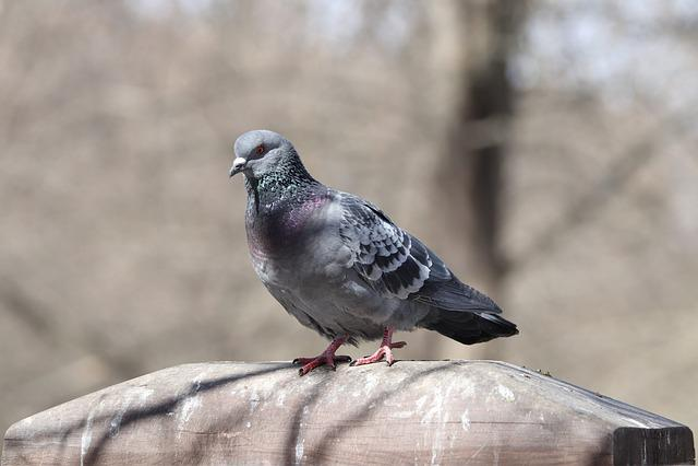 Bird, Nature, Living Nature, Outdoors, Animals, Wild