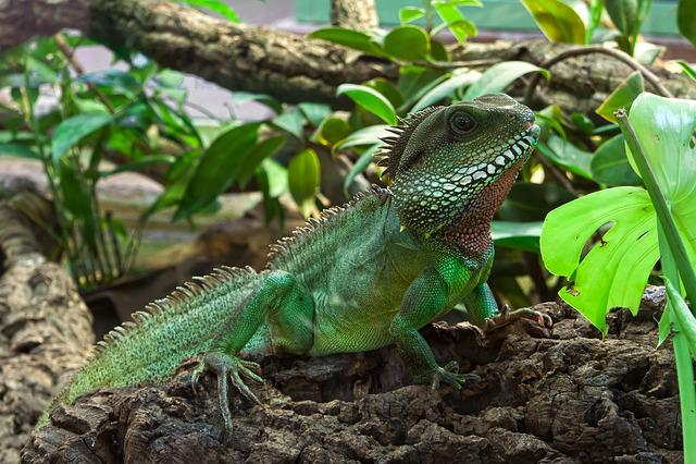 Lizard, Reptile, Animal, Creature, Iguana, Gecko