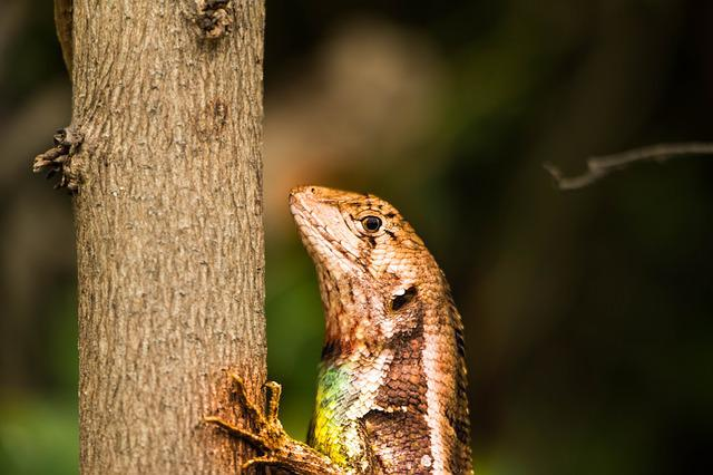 Aminal, Lizard, Cayman, Predator, Animals, Creature