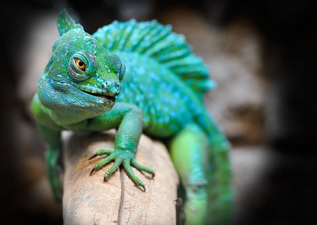 Reptile, Lizard, Green, Exotic, Zoo, Animal