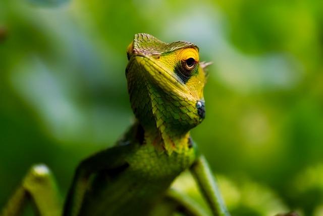 Lizard, Reptile, Wildlife, Closeup, Macro, Green