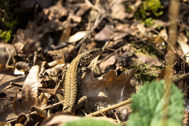 Exe, Lizard, Animal, Macro, Reptile, Iguana, Forest